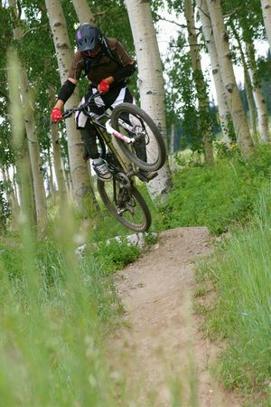 3 aspen trees downhill mtn bike 824kb